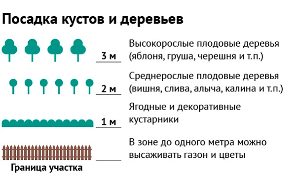 Схема размещения растений разного формата на частной территории относительно разделительной линии – здесь перечислены некоторые породы деревьев и разновидности кустарников и указано расстояние, которое должно быть соблюдено при высадке растений
