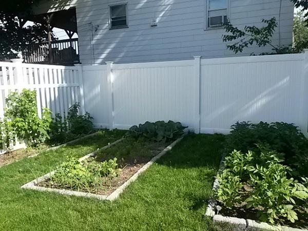 На затененных кронами деревьев грядках растения будут плохо расти и плодоносить, поэтому огород должен быть несколько удален от садовой зоны