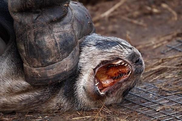 Статья за жестокое обращение с животнымиСтатья за жестокое обращение с животными