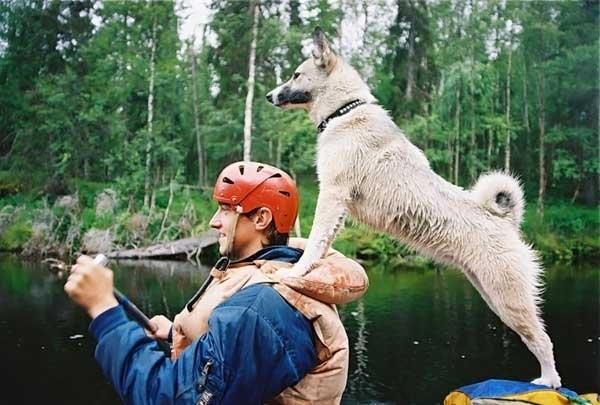 К сожалению, в России нет устойчивой законодательной базы, позволяющей защитить животных. Единственный, кто будет за них бороться – любящий хозяин