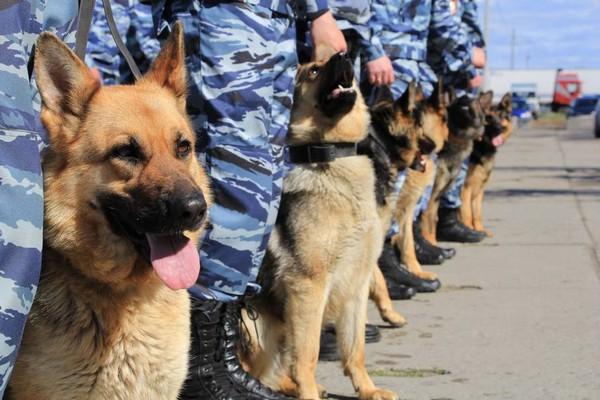 В определенных случаях используют служебных собак